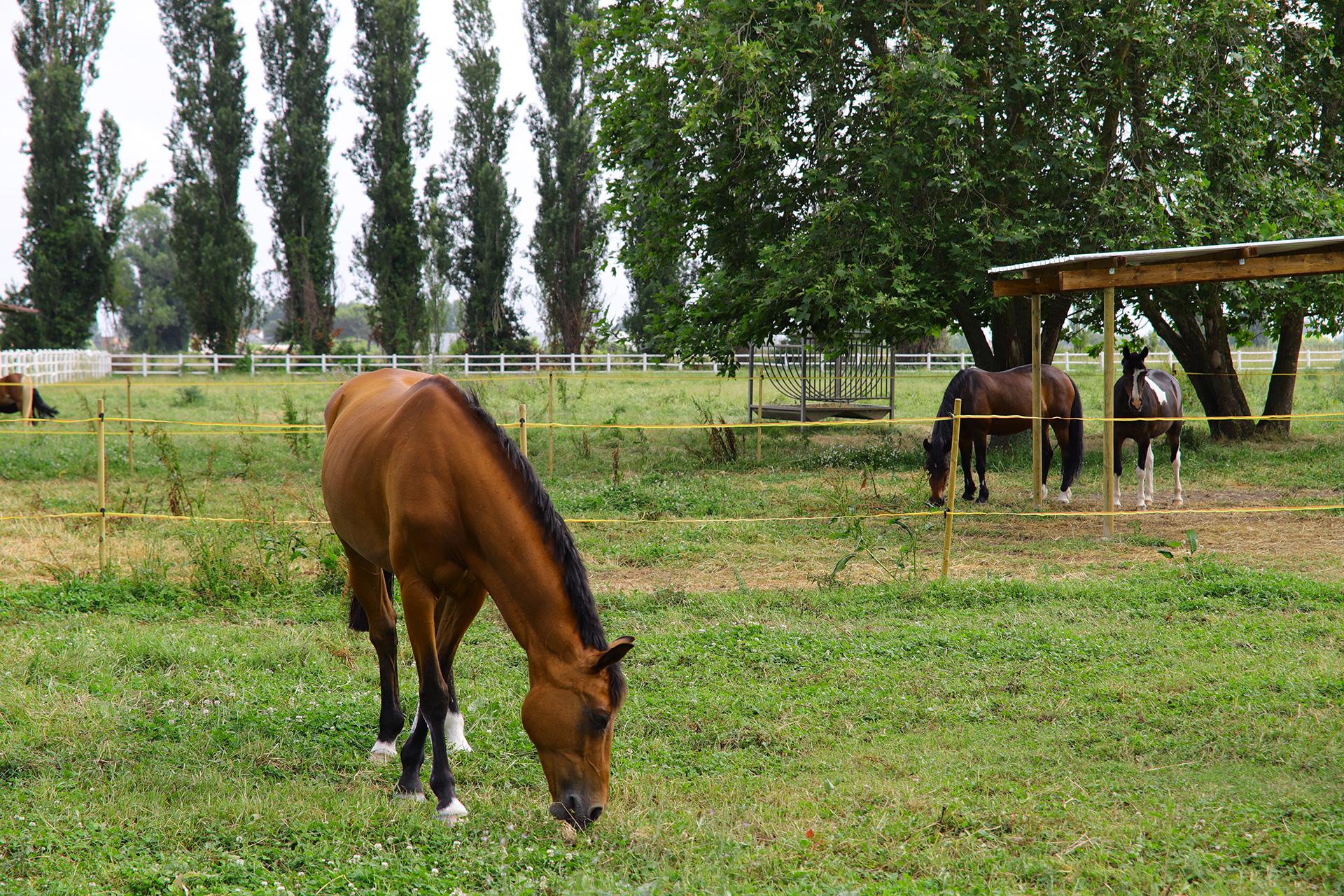 cavalli 04