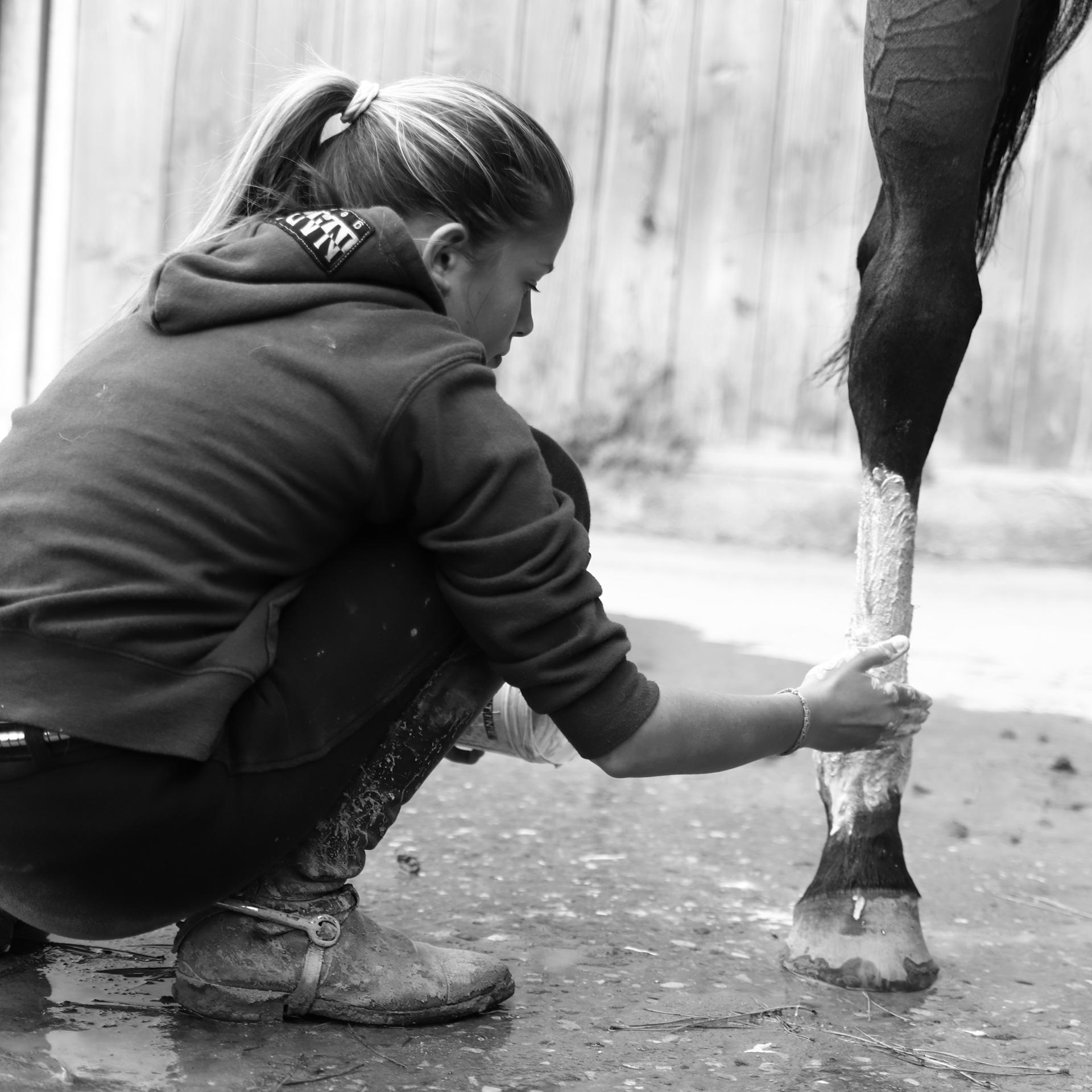 assistenza veterinaria cavalli 01